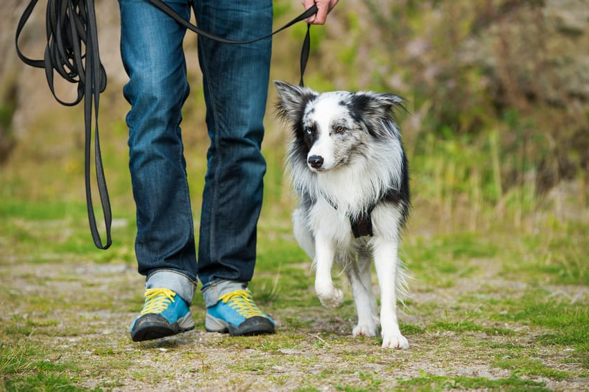 harnais anti traction pour chien