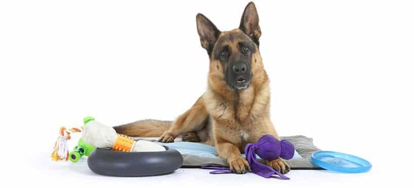 Dressage canin  les accessoires indispensables