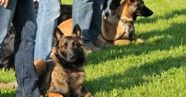 Éducation canine : apprendre les ordres de base
