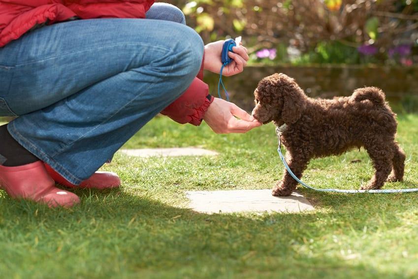 Comment apprendre à mon chien à donner la patte sur commande ?