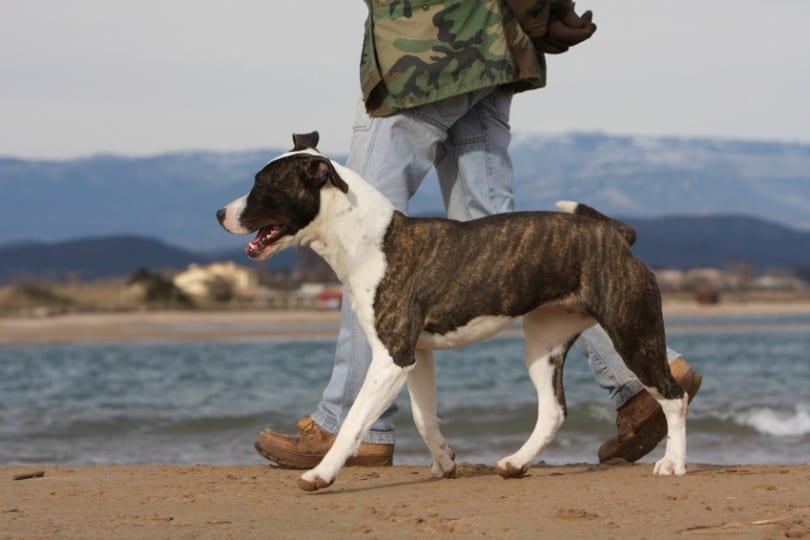 Apprendre à son chien à marcher au pied : trucs et astuces