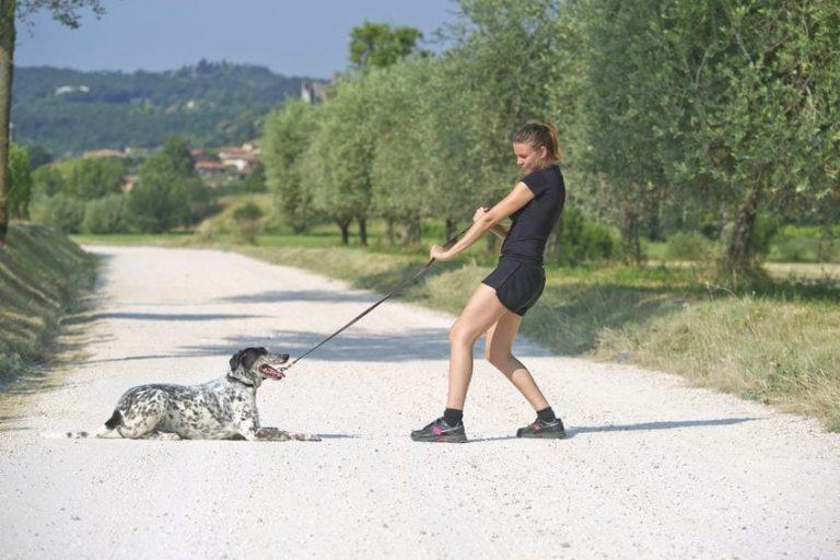 Pourquoi ne pas éduquer son chien via les méthodes coercitives ?