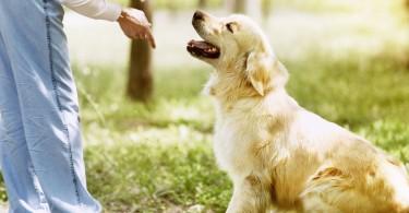 gerer frustration chien