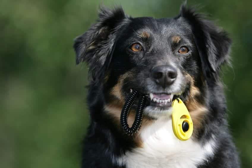 dresser son chien avec un clicker