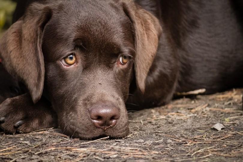tiques et puces chiens