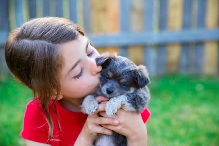 Tout comprendre sur l'éducation positive et son impact sur votre chien
