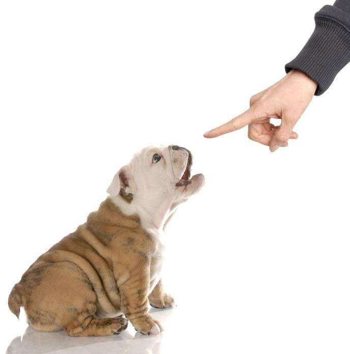 comment sanctionner son chien