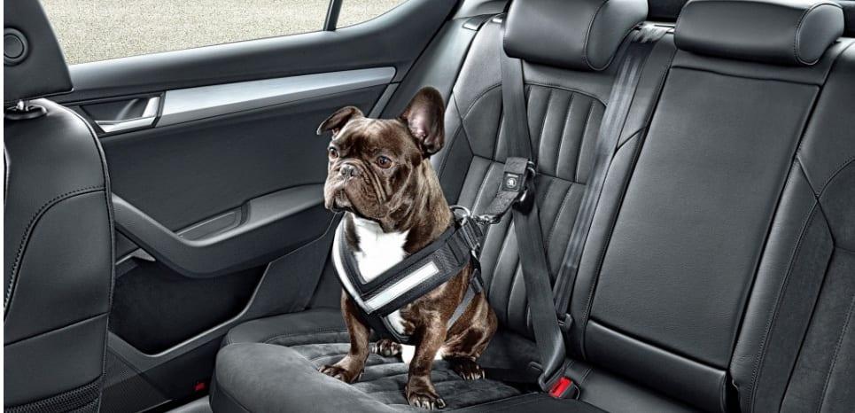 Skoda propose un harnais de sécurité pour chien.