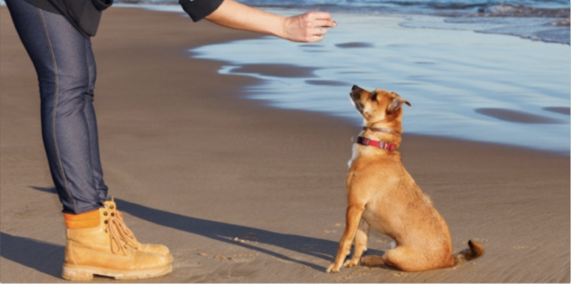 apprendre le touche a son chien