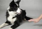 eduquer chien sourd