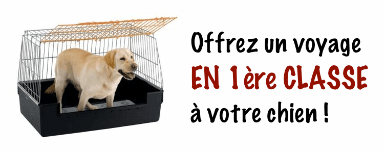 o acheter une cage de transport pour chien au meilleur prix. Black Bedroom Furniture Sets. Home Design Ideas