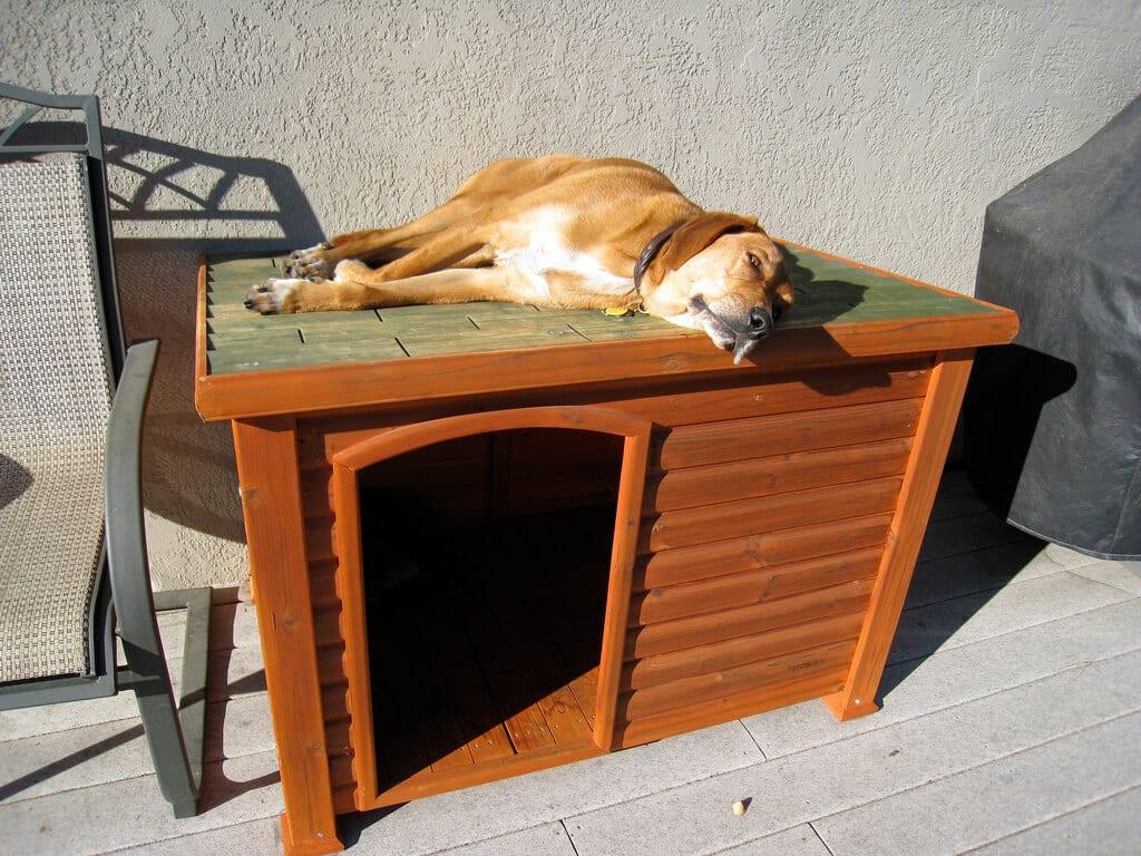 chien sur le toit de sa niche