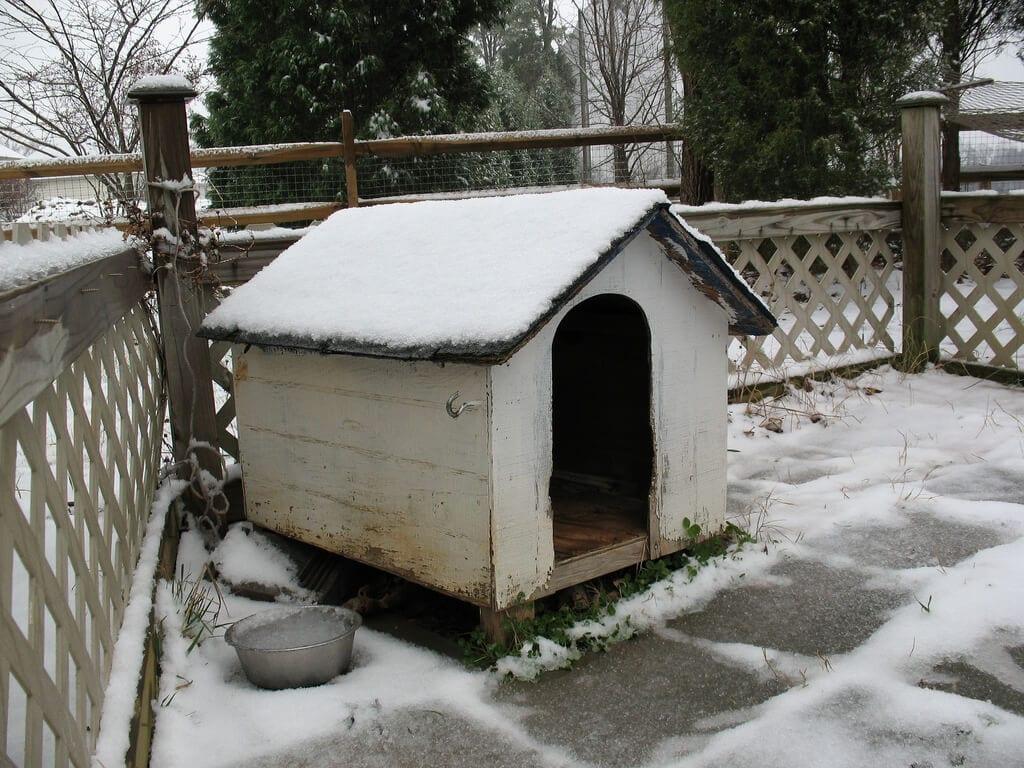 niche chien sous la neige