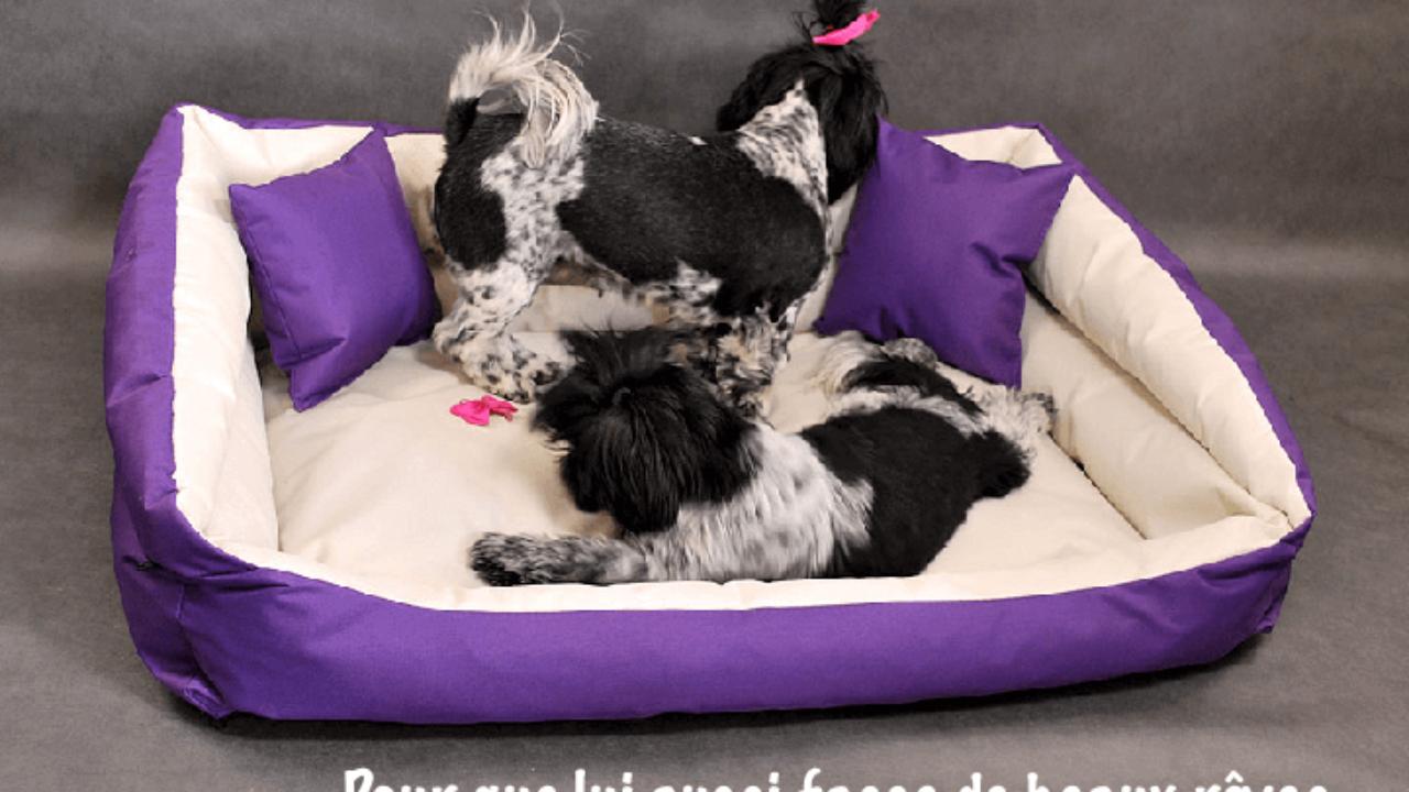 3869a043a6cd1 Où acheter un panier pour chien au meilleur prix ?