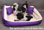 panier-pour-chien