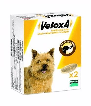 veloxa-pour-chien