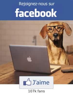 Dressage chien : Comment dresser un chien, éduquer son chien
