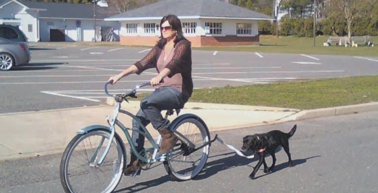 Sports canins : lequel choisir pour VOTRE chien ?