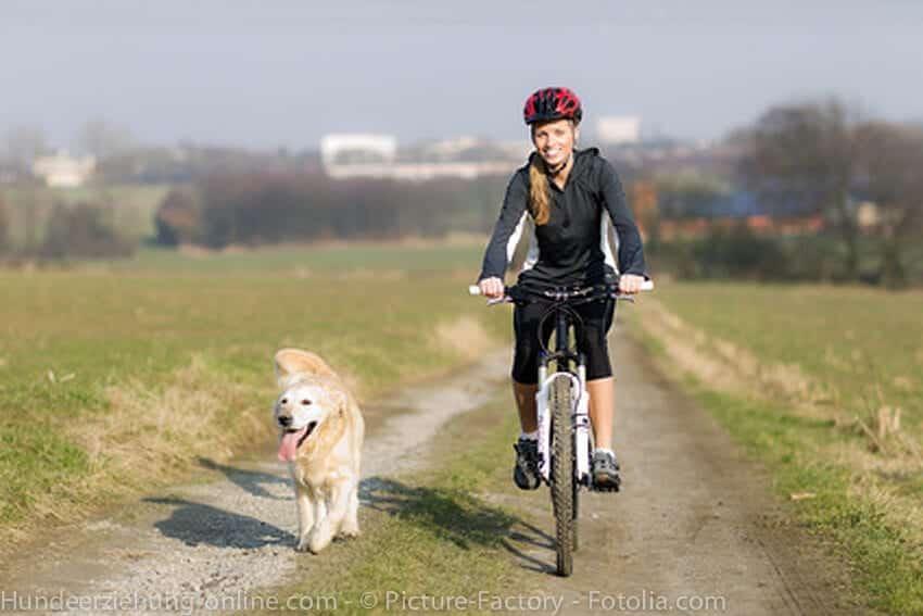 cani vtt avec son chien