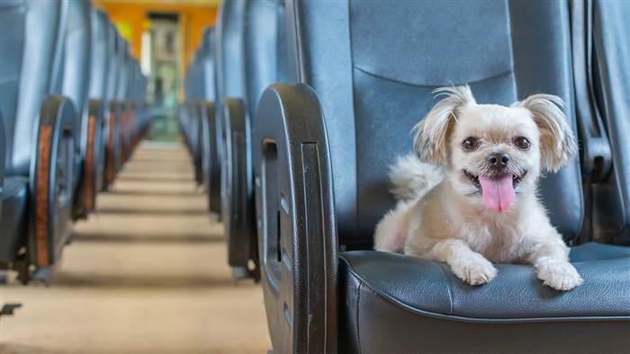 prendre l'avion avec son chien