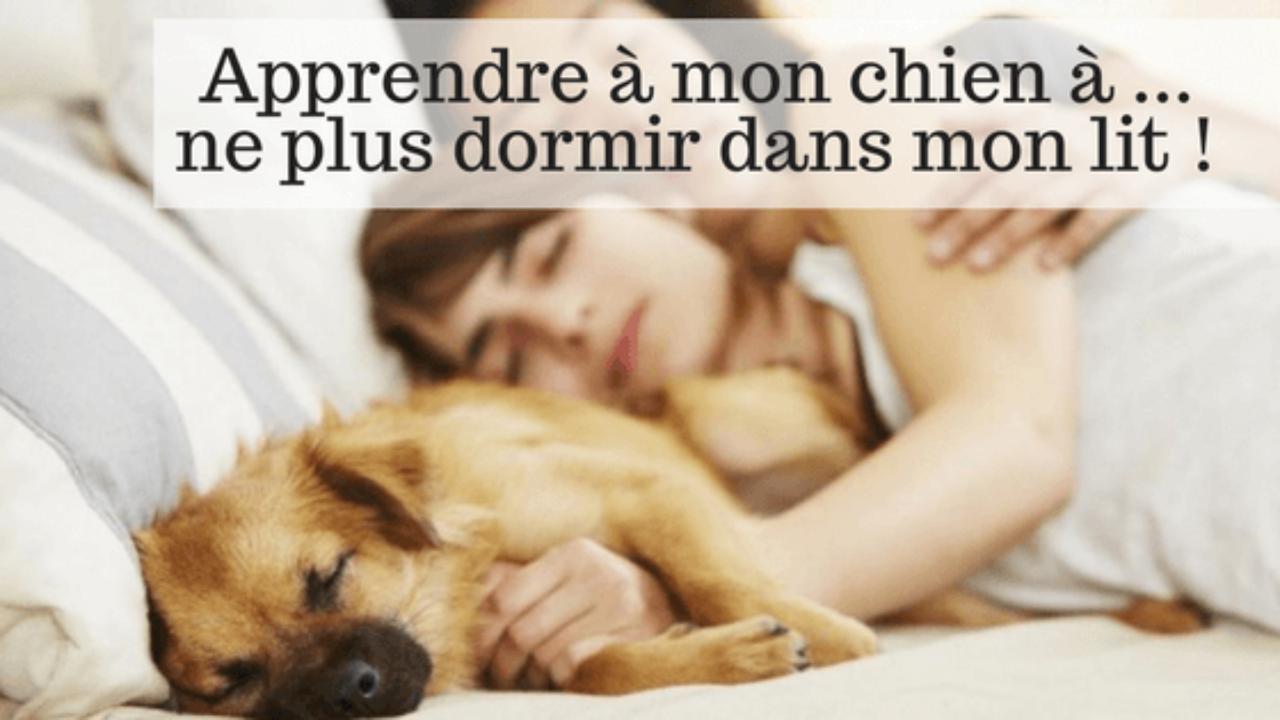 Lit À Chien Comment Pasplus Mon Ne Dans Apprendre Dormir WDE2IH9