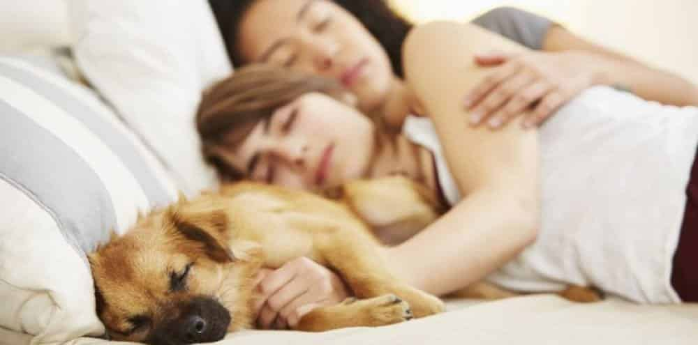 chien dort dans mon lit