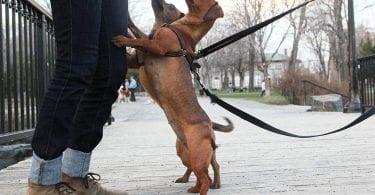 chien qui me saute dessus