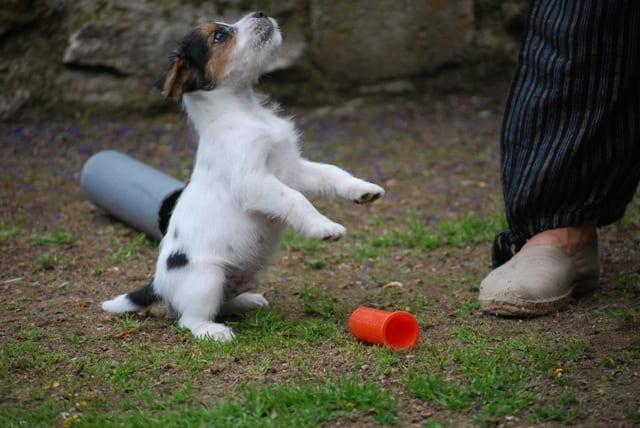 apprendre a son chien a faire le beau