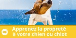 apprenez-proprete-chien-chiot-banniere