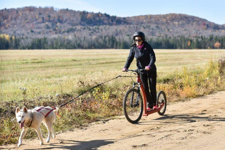 Pratiquer la Cani-Trottinette avec votre chien : comment bien démarrer ?