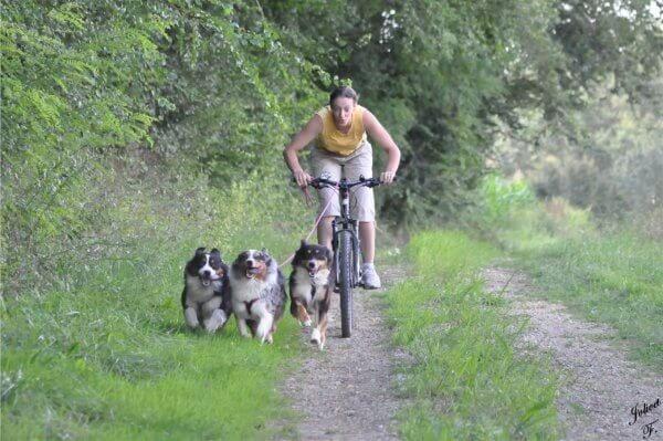 Comment entraîner son chien aux balades à vélo ?