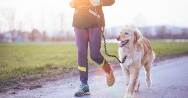 canicross courir avec son chien