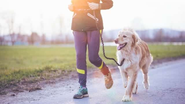 canicross courir avec son chien