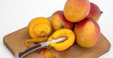 chien-mange-mangue