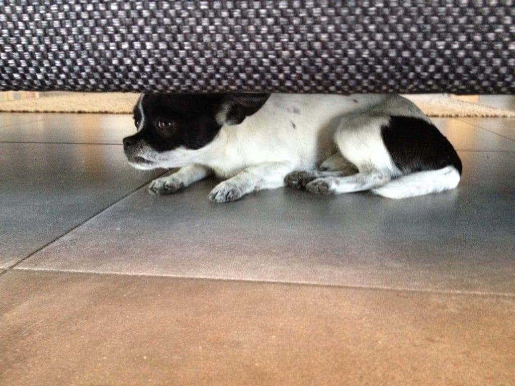 Mon chien se cache souvent sous le canapé ou ailleurs