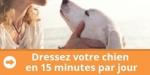 dresser-chien-15-minutes-par-jour-banniere