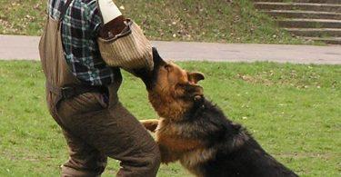 pratiquer le mordant avec son chien