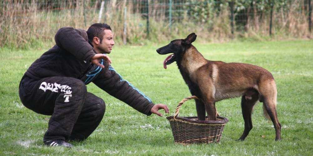 pratiquer le RCI avec son chien
