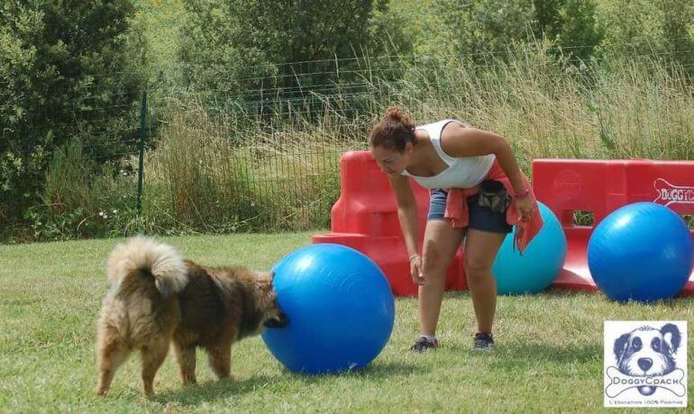 faire treiball avec son chien