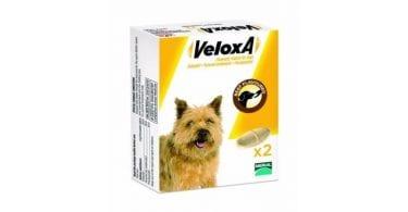 veloxa-chien
