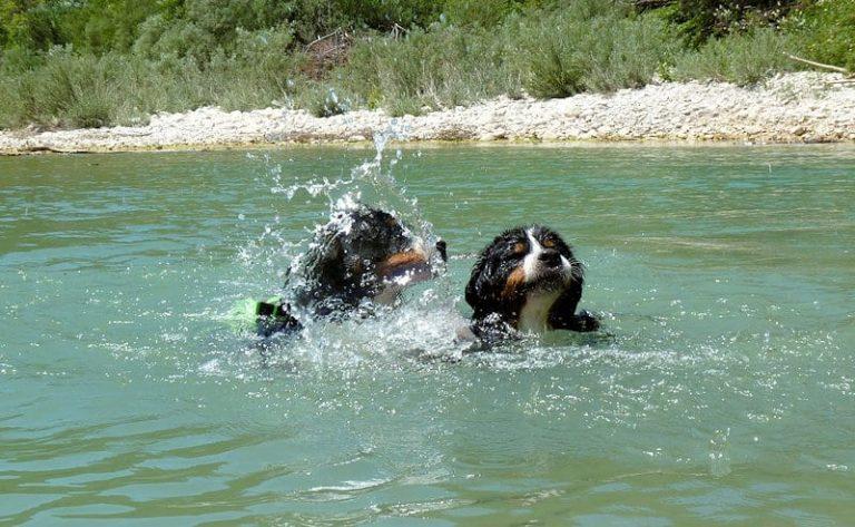 Comment apprendre à votre chien à nager en 8 étapes !