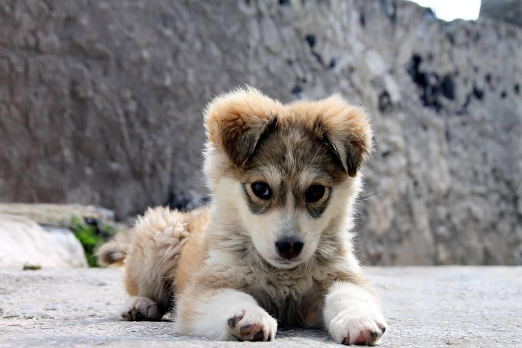 nom de chien en R
